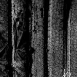 Details in Burned Wood